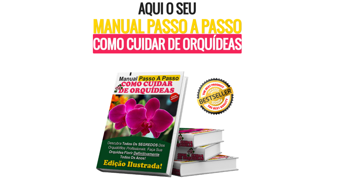 Manual Passo A Passo Como Cuidar De Orquideas
