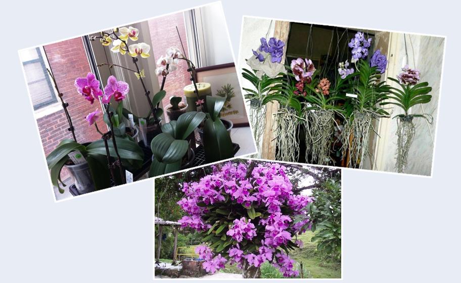 Ebbok Como Cuidar de Orquideas