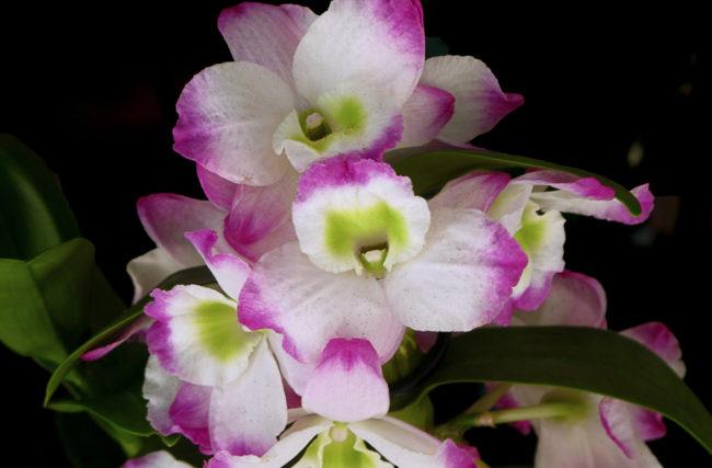 Ebook Como Cultivar Orquídeas