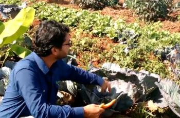 Como fazer uma horta orgânica: o Curso Terra Fértil em 4 Passos te ensina